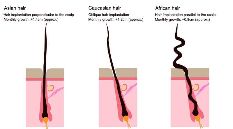 comparison-hair-slavic-hair-asian-hair-africa-hair